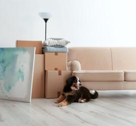 Visuel de l'article Le déménagement, élément perturbateur pour vos animaux