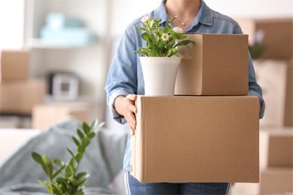 Visuel de l'article Bien déménager ses plantes